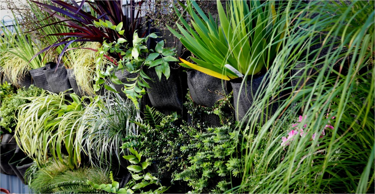 Falling in love with New Zealand native plants - Hanging ...