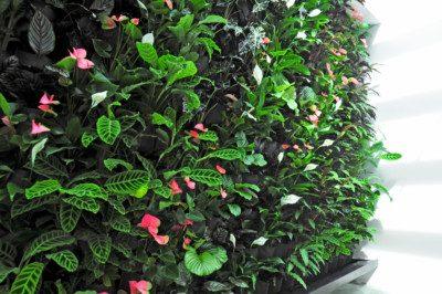 IVHQ Green Wall