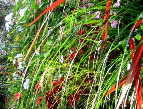Arthropodium cirratum, Chionochloa flavicans, Phormium species
