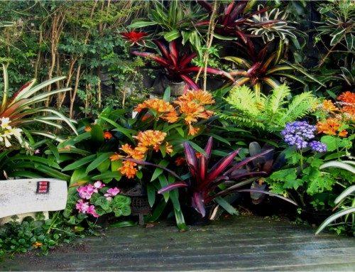 Bromeliads for shade