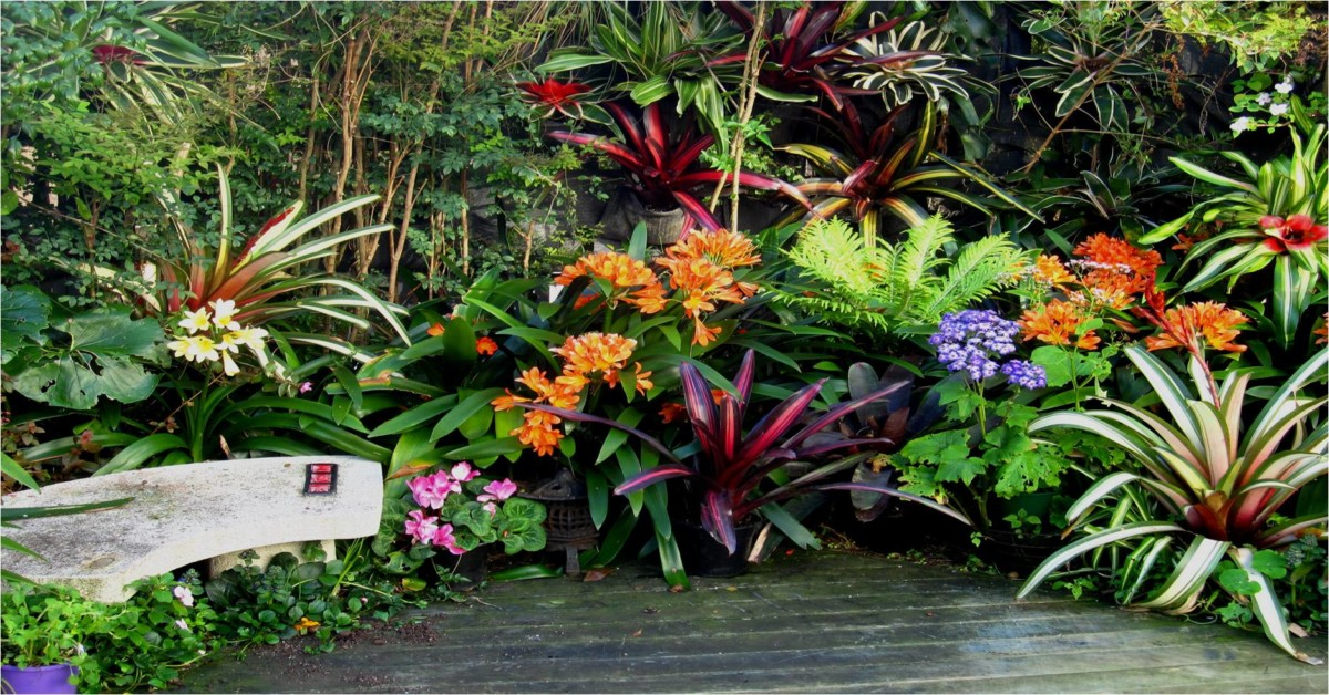 Hanging gardens vertical gardens bromeliads for shade for New zealand garden designs ideas