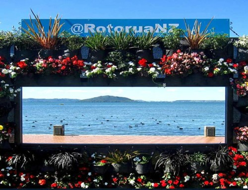 Living Frame – Rotorua