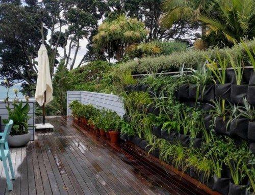 Barry's Garden